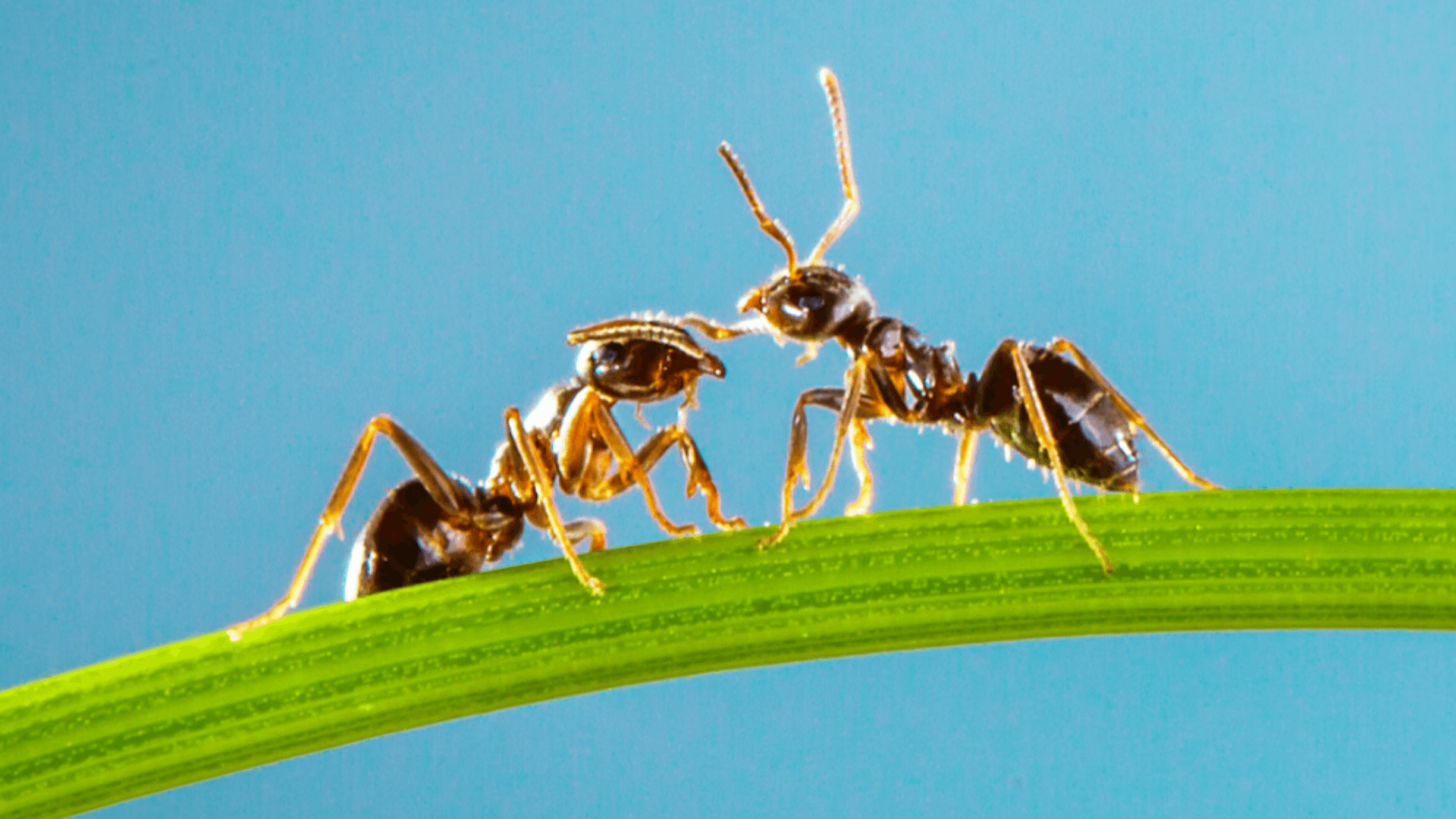 How do you get rid of tiny ants in Mérida Mexico?
