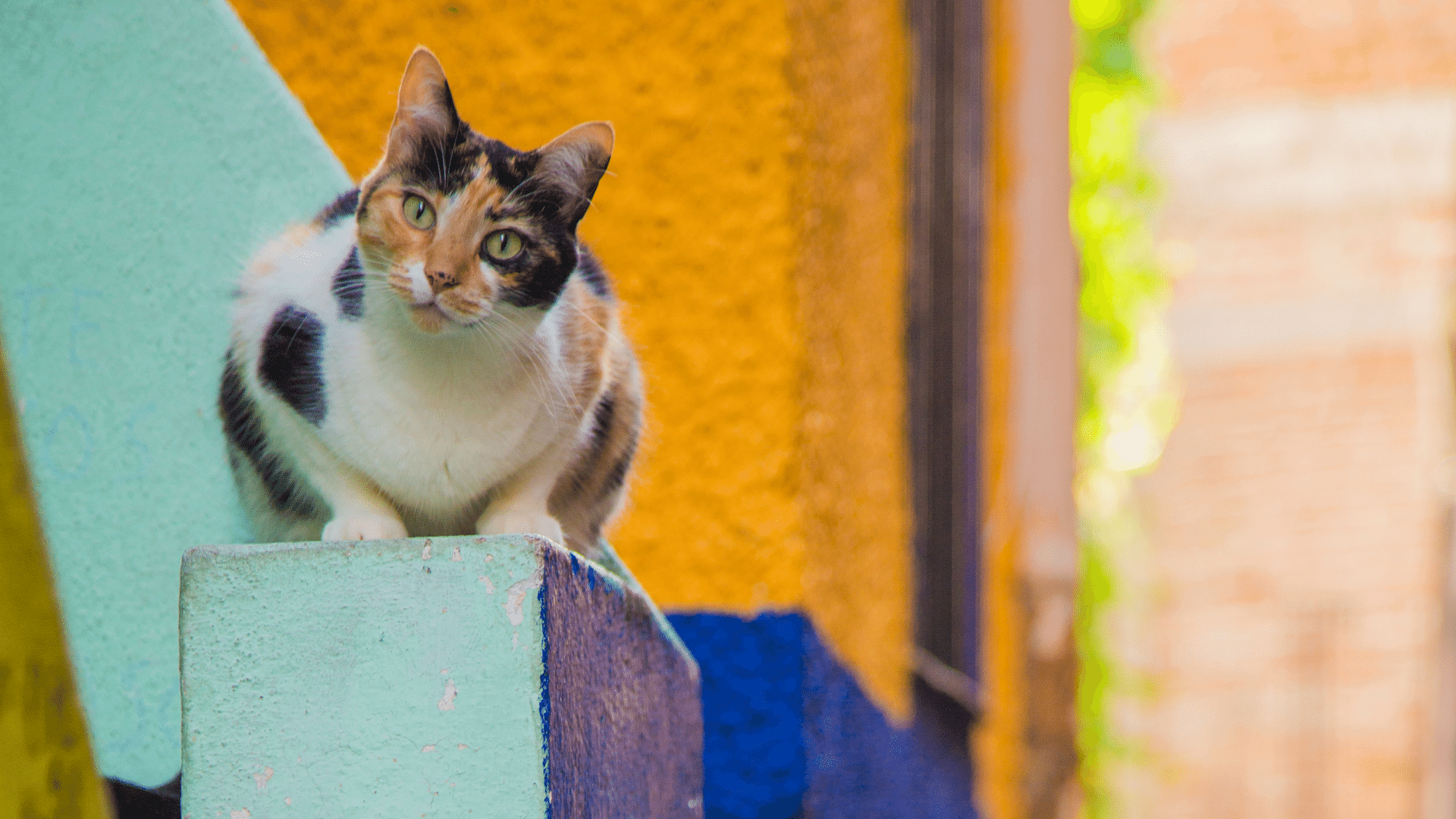 Cat Lover's Guide for Mérida Mexico