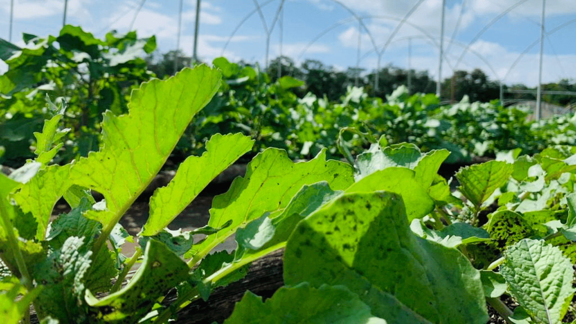 Where can I buy organic produce in Mérida?